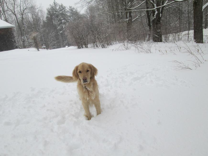 Oliver, the dog.